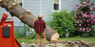 Tree Service Websites