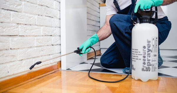 Best Pest Control Websites
